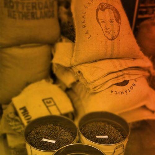 Conseils personnalisés choix de cafés de spécialité